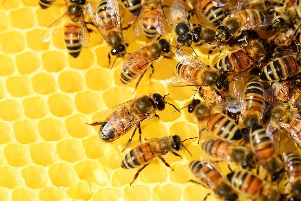 De kracht van honing