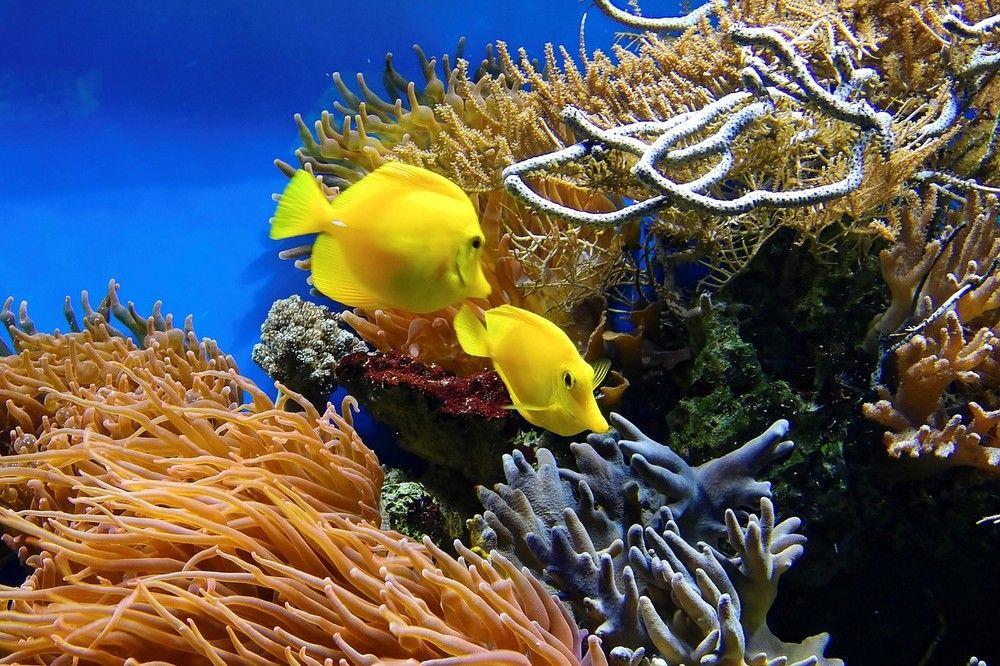 Vissen worden geroepen om dood koraalrif te herstellen