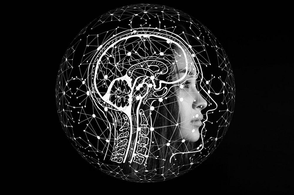 Waarom mensen zo intelligent zijn heel veel breincellen
